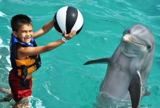 Swimming with Dolphins Cozumel
