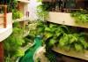 Maya Villa Condo Rental